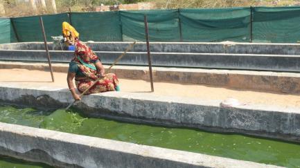 sharma-working-bhurtal-jaipur-spirulina-photo-prabhakar_c5465e2a-3ef3-11e7-8704-a81eba362f7d